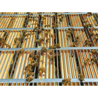 Materská mriežka LR, DB10 perforovaná AL drôtom